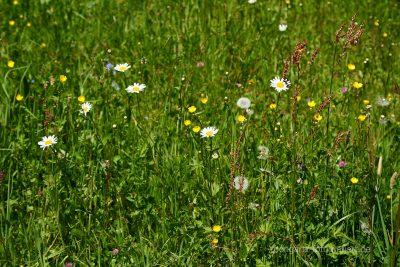 artenvielfalt,biodiversität,blumen,kräuter,wildkräuert,lebensraum